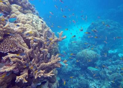 great barrier reef 2015